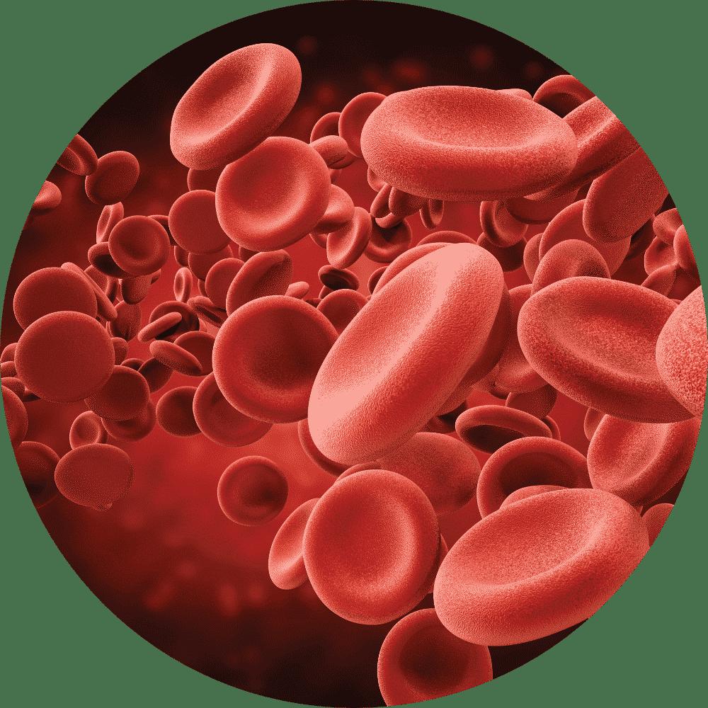 blood-cells-image